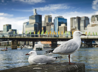 Australia, Sydney, Darling Harbor, Seagulls at harbor
