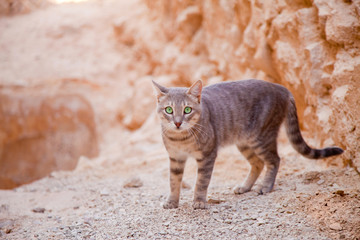 Desert valley cat