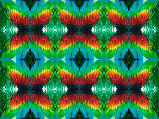 Parrot feathers pattern