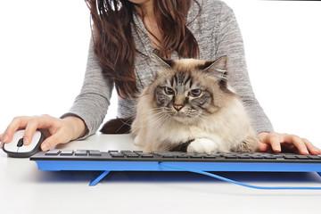femme avec chat sur clavier d'ordinateur