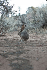 Rabbit in wilderness