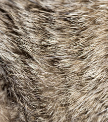 background of fur animal