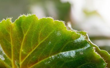 green leaf. close-up