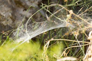 old spider webs in nature