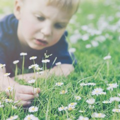 Boy picking daisies