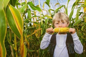 Boy (4-5) eating corn among corn crop