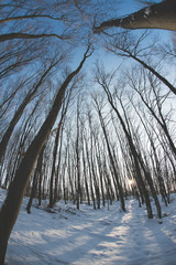 winter landscape, wilde angle perspective