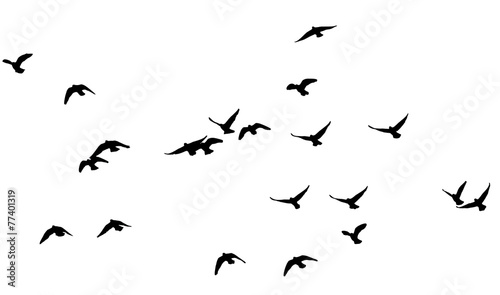 Fotobehang Vogel flock of pigeons on a white background