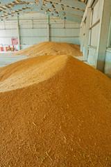 pile of wheat corns in warehouse