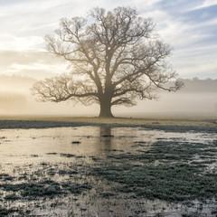 Tree by marshland