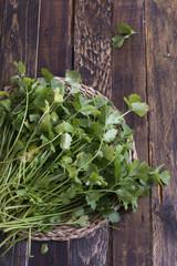fresh coriander or cilantro on wooden board