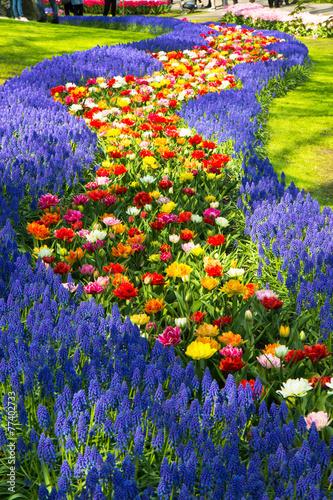 Plakát, Obraz Tulipány v Keukenhof parku