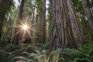USA, California, Humboldt Count, Eureka, Redwood National Park, Deep in forest