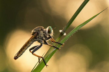 Indonesia, West Java, Bekasi, Close up of rubber fly