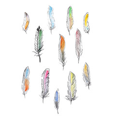 lot of bird feathers color watercolor drawing by hand
