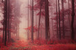 Red colored foggy forest