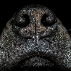 Close up of dog's nose
