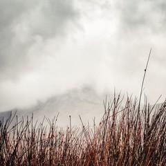 UK, Scotland, Inner Hebrides, Jura,  Mist in mountains