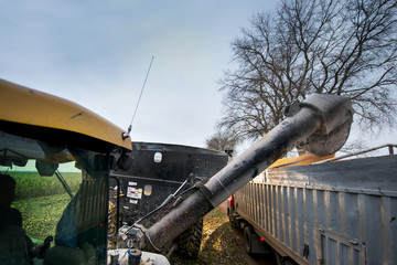 Combine throws in the harvested grain truck