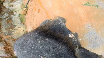 Elephant Trekking POV, Thailand, S E Asia