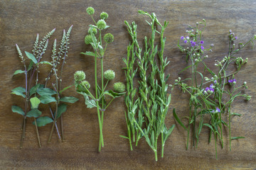 Bunches of various herbs arranged in row on wooden surface