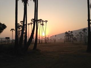 India, Andhra Pradesh, Vishakhapatnam, Vishakapatnam Bypass, Sunrise over palm trees