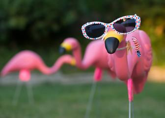 Pink plastic flamingos in backyard