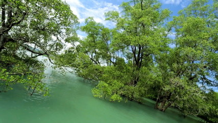 Mangrove forest protect coastal areas, Thailand