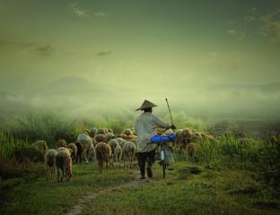 Shepherd walking with sheep and bicycle