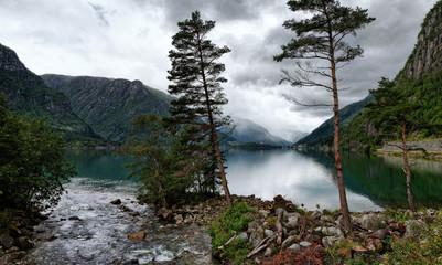 Norway, Sogn og Fjordane, Stryn, Pine trees and river