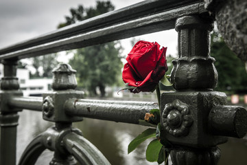 Red withered rose on a bridge in Prague.