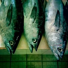 Close-up of three fish