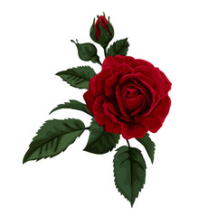 Beautiful red rose isolated on white. Perfect for background .