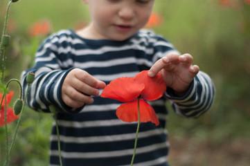 Boy touching poppy