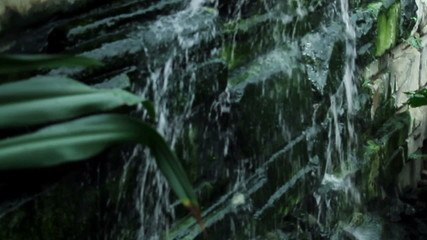 Water drops falling down rocks in a botanic garden with plants