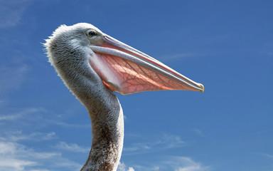 Malaysia, Langkawi, Kedah, Kota Setar, Kangar, Portrait of pelican