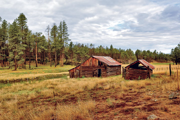 USA, Abandoned cabin in National Forest