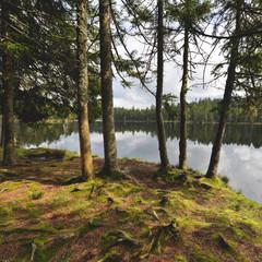 Switzerland,  Jura, Roots at lakeshore