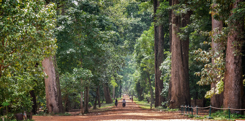 Cambodia, Angkor, Panoramic view of park with old trees