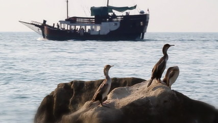 SLOW MOTION: Birds on the rock and ship in the distance.