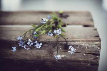 Norway, Forget-me-not flowers on old wooden box