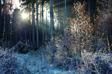 Germany, Frost in forest