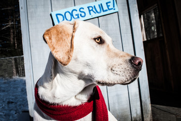 Dog standing in front of Dogs Rule sign