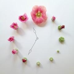 Studio shot of flower clock concept