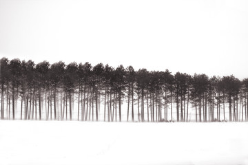 USA, Michigan, Trees in snow blizzard