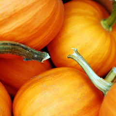 USA, Massachusetts, Close-up of pumpkins