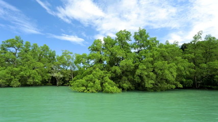 Mangrove trees growing in coastal region, Southeast Asia