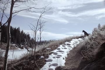 USA, Colorado, El Paso County, Shubarth Trail, Rampart Reservoir, Dog on trail
