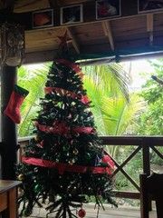 Christmas tree in tropical location