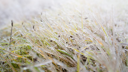 Close-up of grass in ice